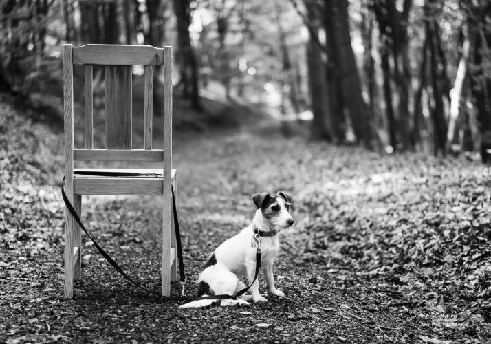 Urlaubszeit – Wenn Tiere verlassen werden