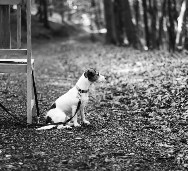 Urlaubszeit - Wenn Tierliebe keine ist