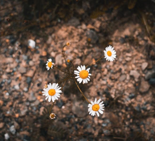 Dora Pi Art Photographie