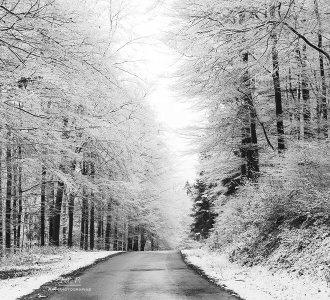Winterberger Naturlandschaften