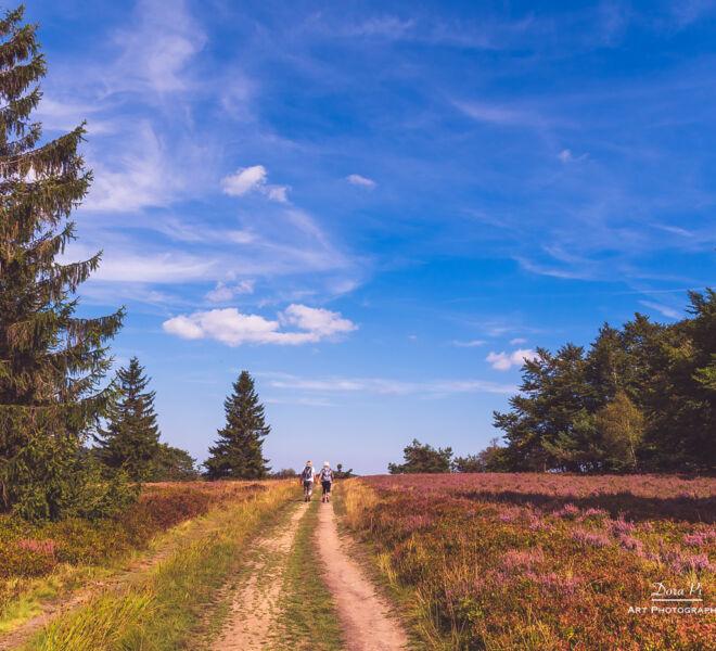 Winterberger Naturlandschaften - Hochheide